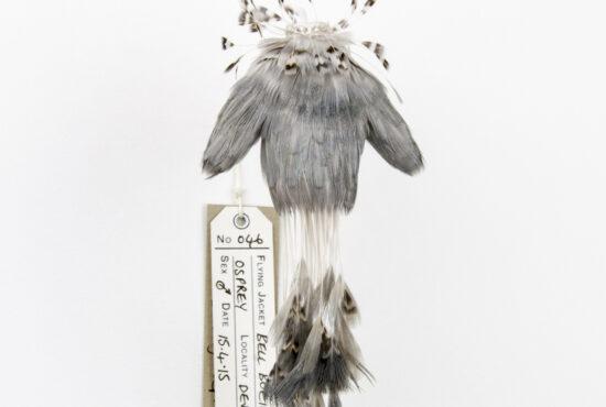Jane Edden - Avian Forms