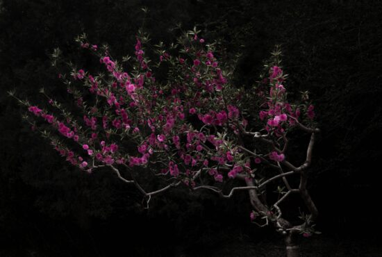 Shen Wei - Between Blossoms
