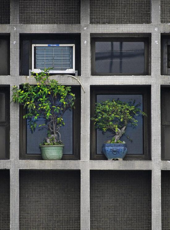 Hong Kong Flora