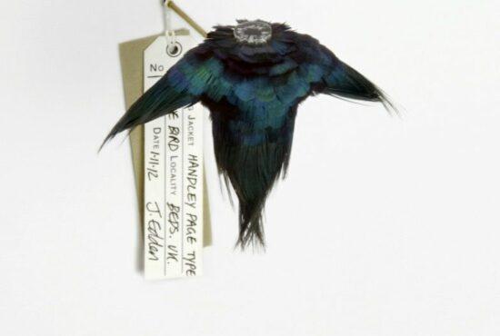 Jane Edden exhibits in Flock: Birds on the brink